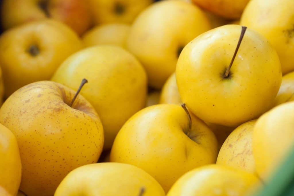 Schüler-Essen: Gesund & fairtrade