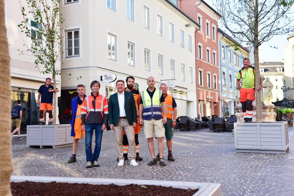 Neue Baum-Allee dekoriert den Hauptplatz