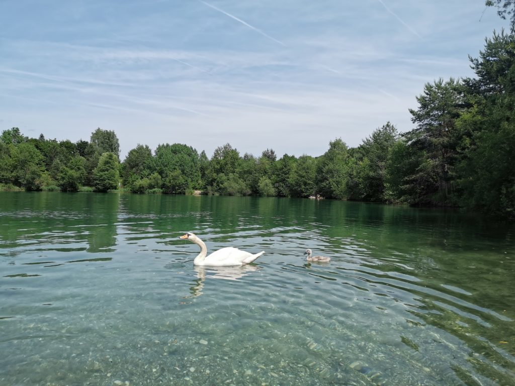Silbersee: Gratis baden seit 30 Jahren
