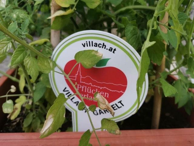 Villach gartelt: Die Innenstadt erblüht