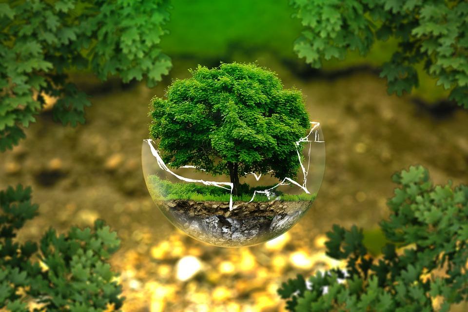Geniale Umweltprojekte gesucht!