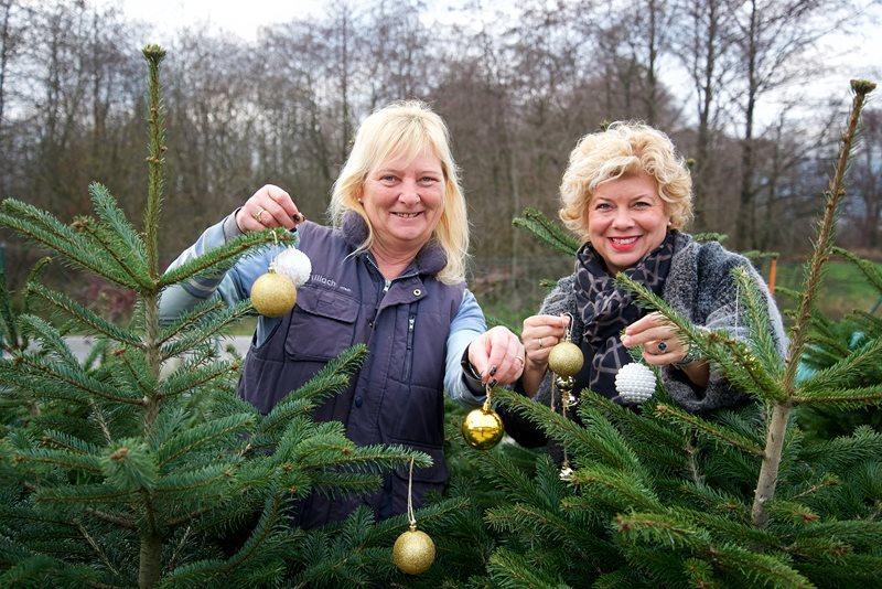 Lebende Christbäume für nachhaltige Weihnachten