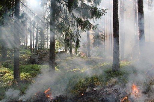 Waldbrandgefahr auch in Villach!