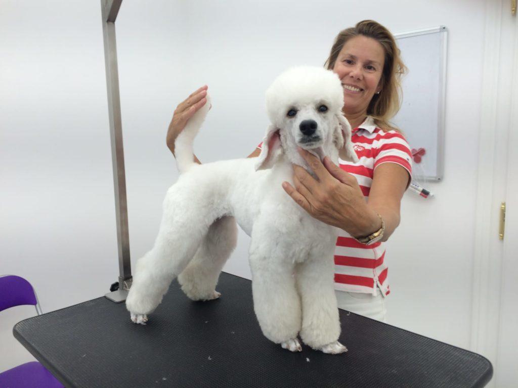 Kostenlose Hilfe bei Fragen zur Hundepflege