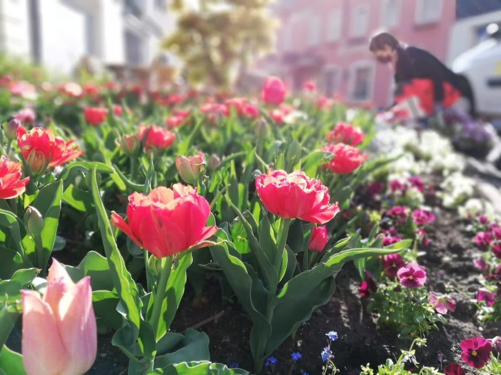 Stadtgartenteams machen ganz Villach frühlingsfit