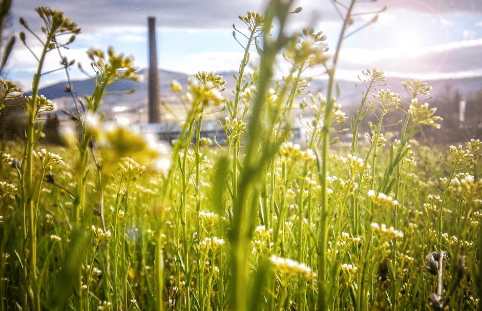 Stadt fördert Umstieg auf erneuerbare Energie