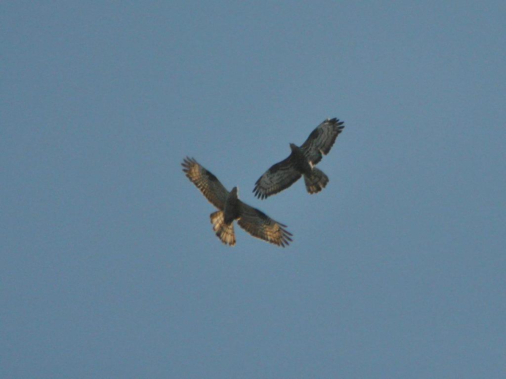 Naturpark ist fest in den Klauen der Greifvögel