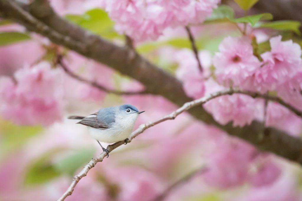 Vogelgezwitscher macht glücklich